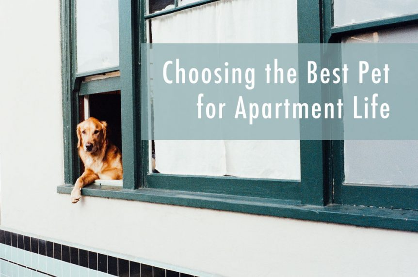 Best Apartment Pets