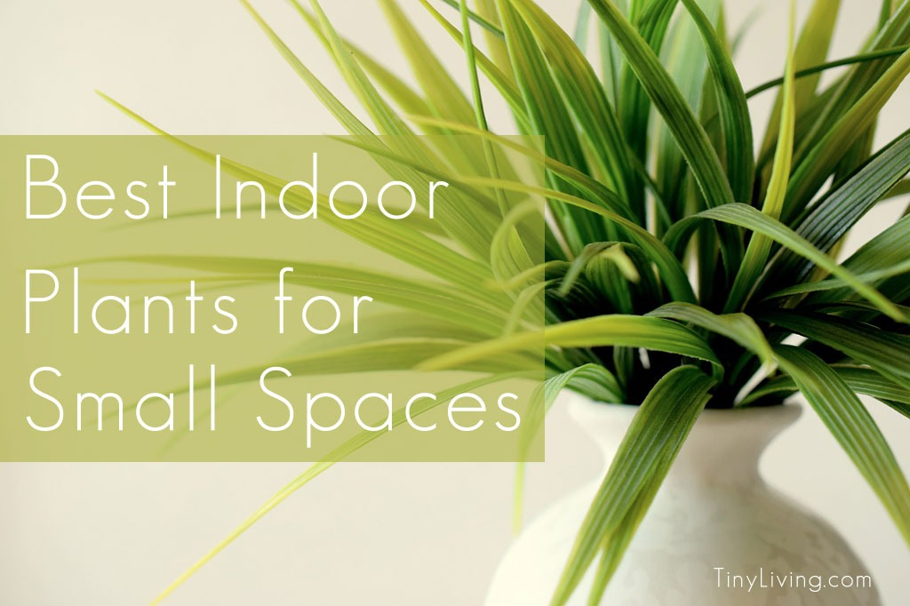 Tiny Home Designs: The Best Indoor Plants For Small Spaces