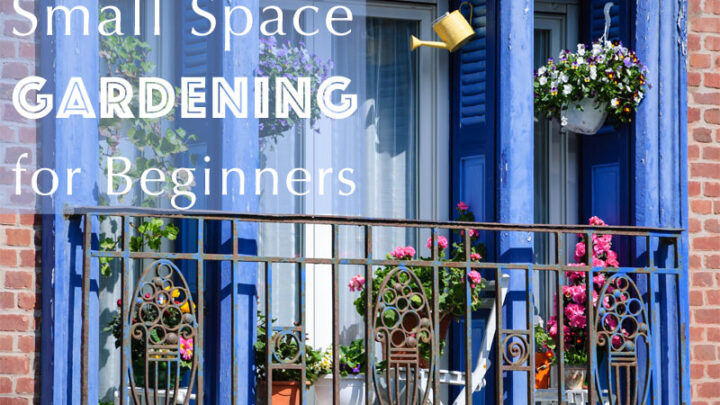 Small Space Gardening for Beginners