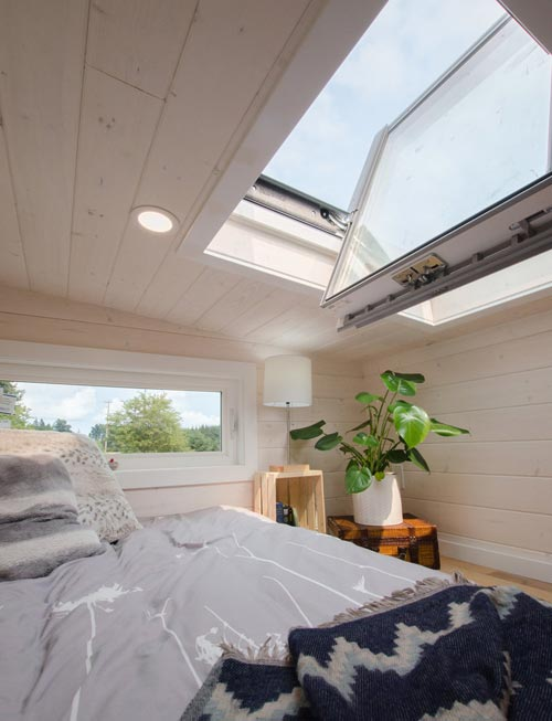 Skylight - Stellar Jay by Rewild Homes